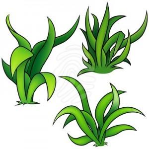 plant-clip-art